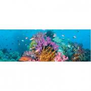 Panorama Coral Reef 2000 pezzi