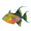 Pesce Balestra pagliaccio cm. 14.5