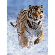 Tigre nella neve 500 pezzi