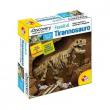 Fossili di Tirannosauro
