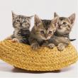 Tris di gattini 500 pezzi