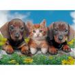 """Puzzle """"Amici cani e gatto"""" 300 pezzi"""