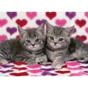 Coppia di gattini 100 pezzi
