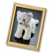 Baby Leone albino 692018 Venturelli