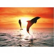 Delfini al tramonto 500 pezzi