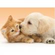 Tenero bacio tra cane e gatto 500 pezzi